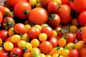 tomatoes-tomato-harvest-healthy-food-162830 (2)