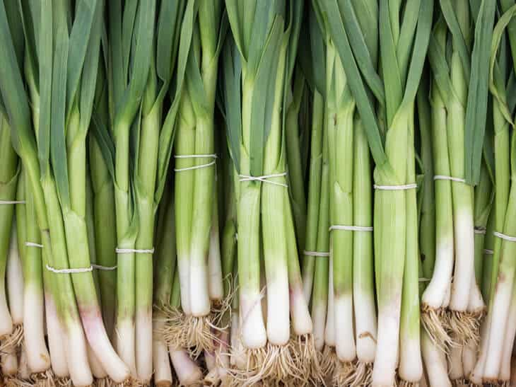 Lots of Bunches of scallions