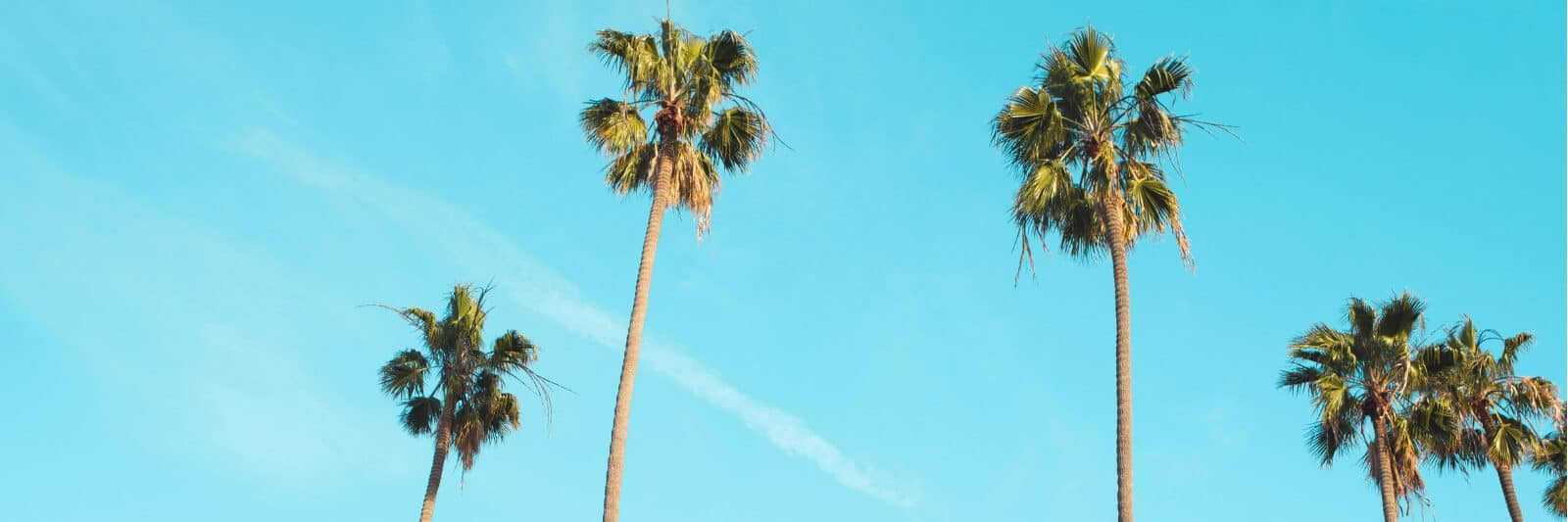 Looking up at palm trees swaying in the wind on a blue sky day