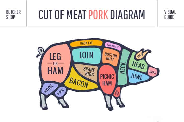 A diagram showing the pig shape and where the different cuts of pork come from on the body. Bacon is from the belly.